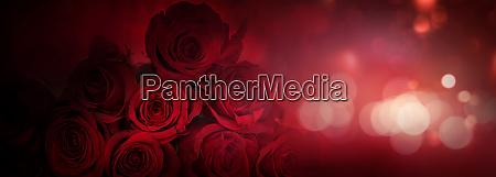 dark red roses background