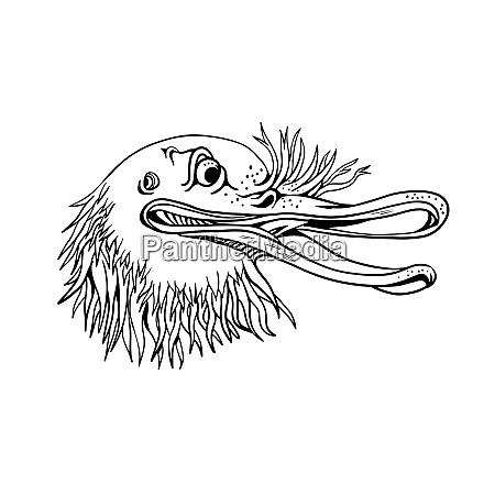 angry kiwi bird head cartoon black
