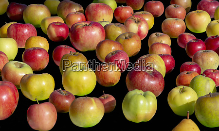 various apple breeds