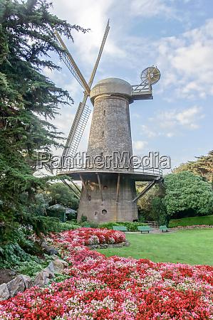dutch windmill and queen wilhelmina tulip