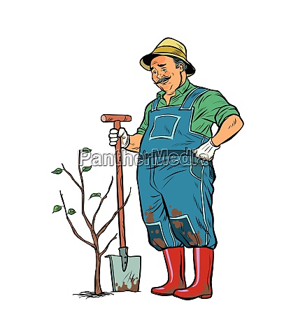 old gardener plants a seedling isolate
