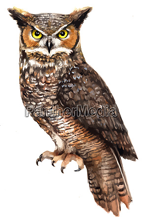 owl bird wisdom mystery predator illustration