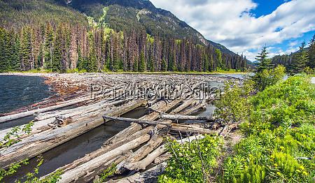 driftwood in majestic mountain lake british