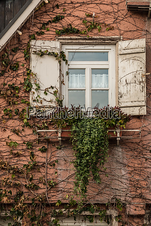 old house with ivy and white