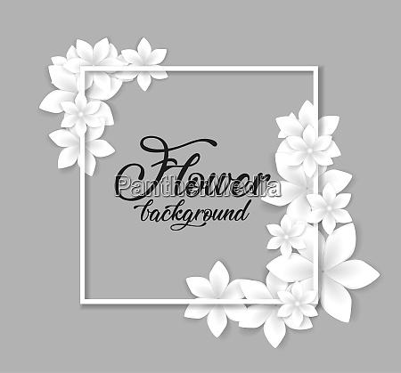 flower pink background