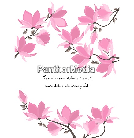 vector magnolia flowers