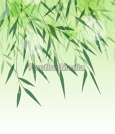 bamboo green leaf