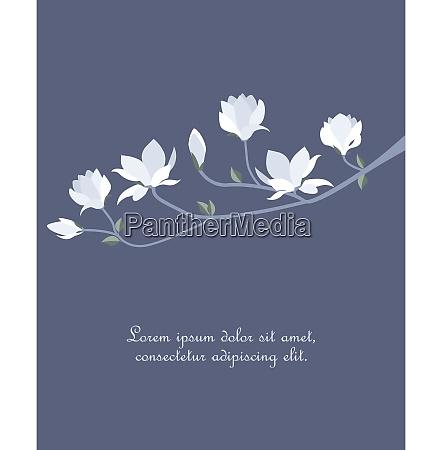 vector, magnolia, flowers - 26145150