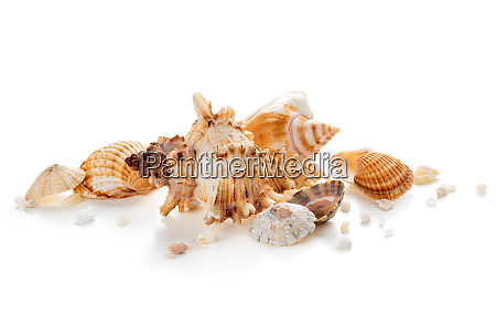shells in a row