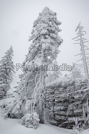 snow covered trees and rocks in