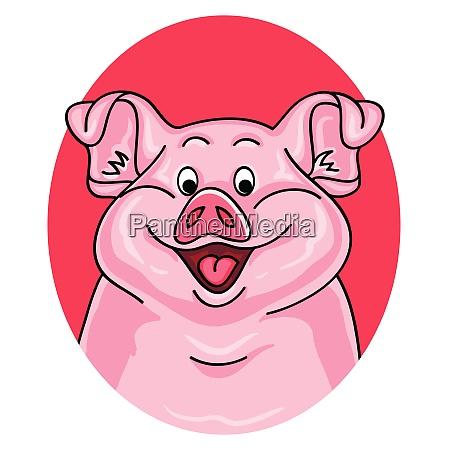 pig portrait on white background