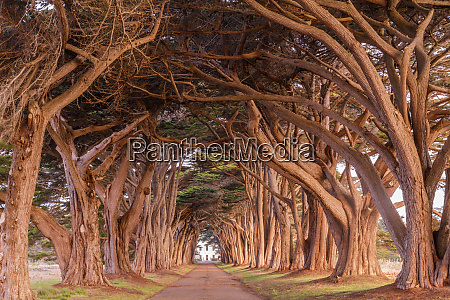 cypress tree tunnel painted in golden