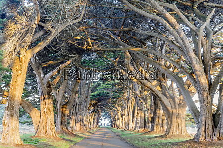 sunrise over cypress tree tunnel
