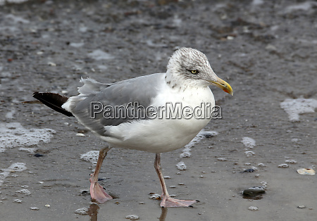 seagull on the edge of the