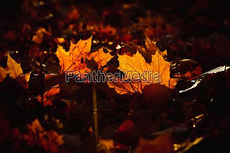 orange yellow tree leaf forest autumn