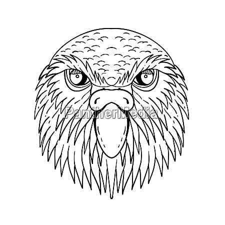 kakapo owl parrot head drawing black
