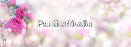 roses on pastel colored spring background