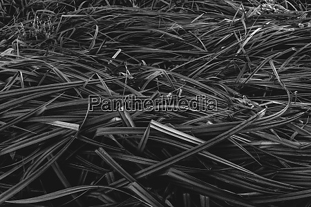 detail of windswept marsh grasses in