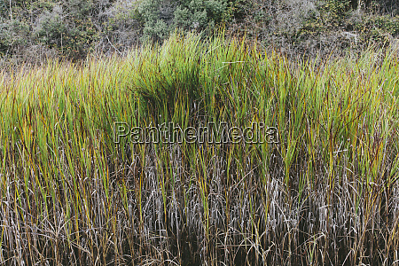 marsh grasses along the shoreline at