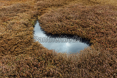 intertidal pool of standing water with