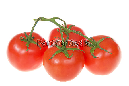 bunch of ripe tomatoes on the