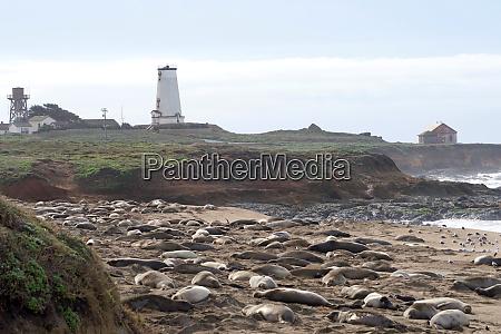 piedras blancas lighthouse on the