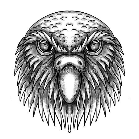 kakapo owl parrot head tattoo