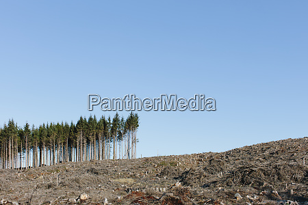 small stand of trees on the