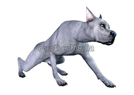 3d rendering blue grat dane dog