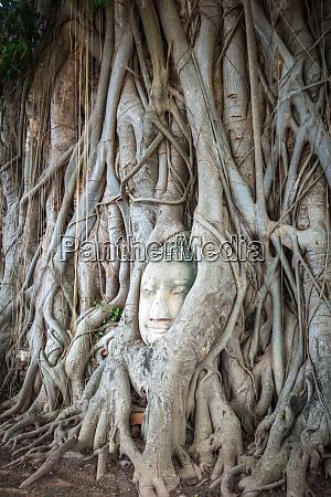 buddha head in tree roots wat