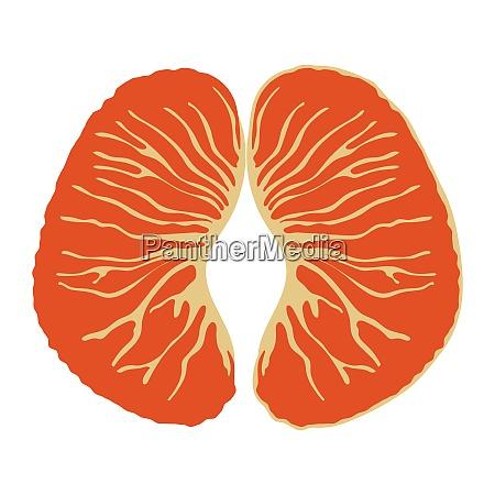 flat design icon of mandarin in