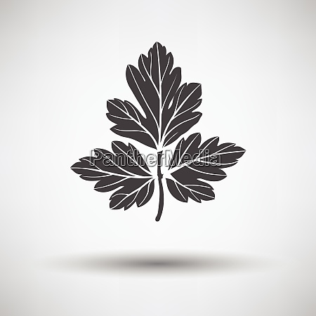 parsley icon parsley icon on gray