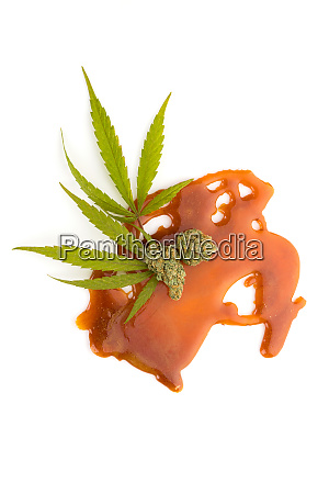 cannabis concentrate shatter bud and leaves