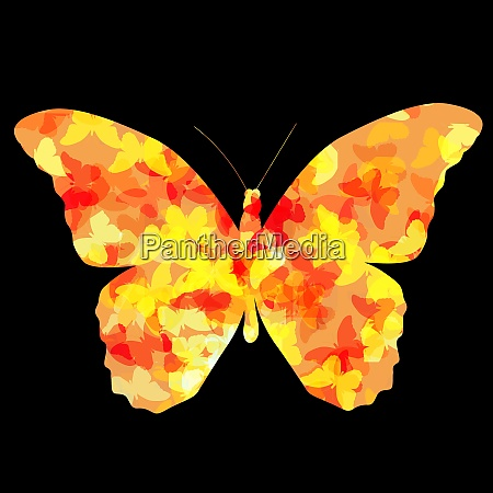 colored butterfly icon silhouette vector illustration