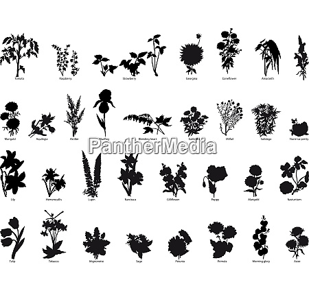big collection of different plants silhouette
