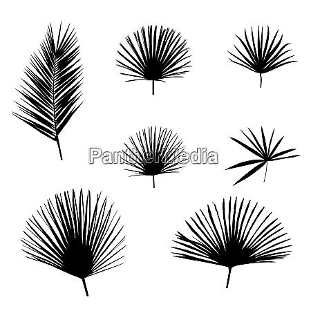 black palm leaf on white background