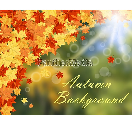 autumn frame with maple leaves and