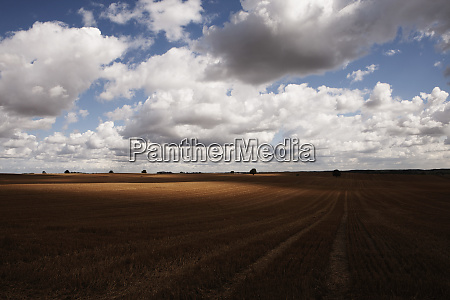 idyllic clouds over rural agricultural crop