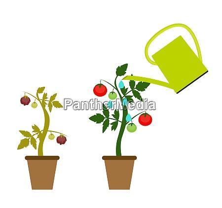 garden background vector illustration growing bush