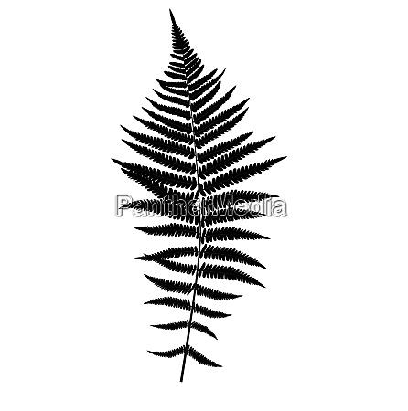 fern leaf silhouette vector background illustration
