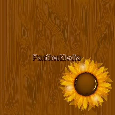 sunflowers illustration background illustration