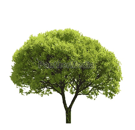 colored silhouette tree isolated on