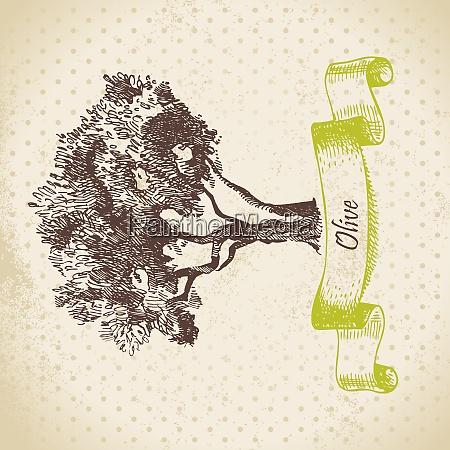 olive tree hand drawn illustration