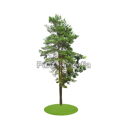 colored silhouette tree isolated on white