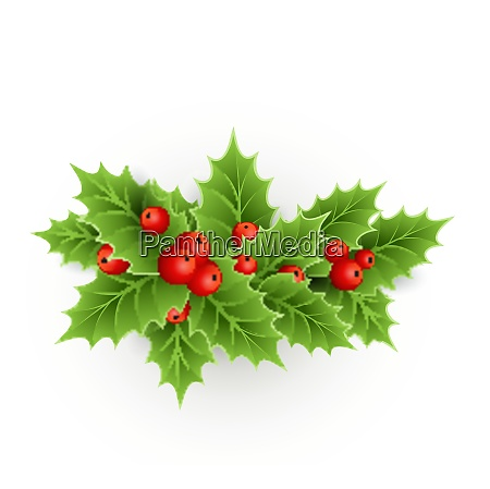 vector christmas holly with berries eps
