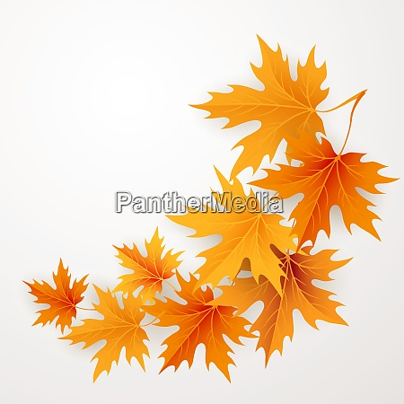 autumn maples falling leaves background