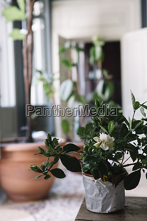 potted plants for a table decoration