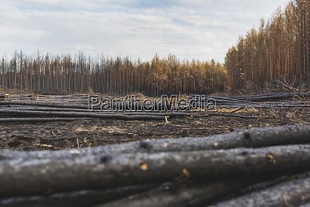 germany brandenburg treuenbrietzen forest slash and