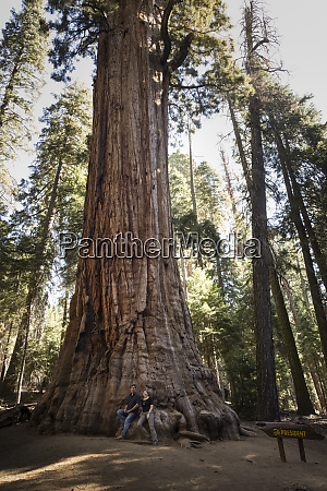usa california sequoia national park sequoia