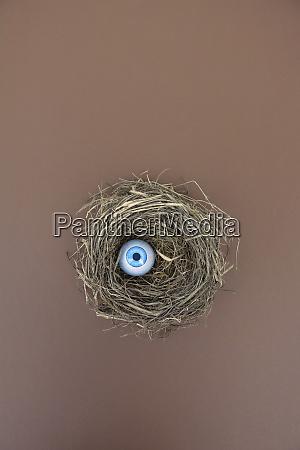 bird nest with plastic eyeball